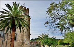 """Tuscany - Suvereto takes its name from the cork oak woods that surround the village together with olive oil trees and vineyards. It is considered as one of the best villages in Tuscany.  It still presents intact city walls and each summer many events and """"Sagre"""" (feast) take place right inside"""