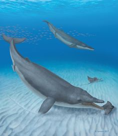 Baleen whales' ancestors were toothy suction feeders