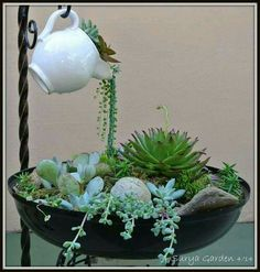 Arrangement Displaying trailing succulents