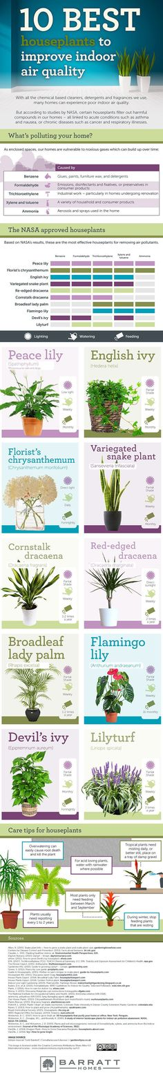 Your air will feel cleaner with these indoor plants.