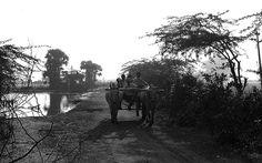 Men on their way to work in their fields! Mallam Village, Nellore District, AP. India
