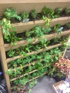 Growing Steady: The Dream Of The Is Alive...Part 1 (Portlandu0027s Yard, Garden  U0026 Patio Show)