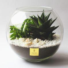как сделать флорариум - Поиск в Google