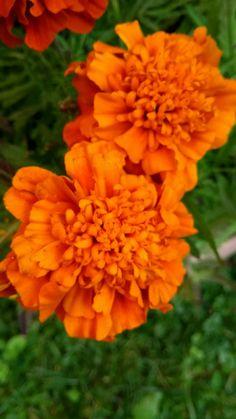 Marigold, Beautiful Flowers, Birds, Happy, Nature, Plants, Gardens, Flowers, Naturaleza