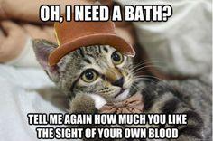 Condescending Wonka Kitten