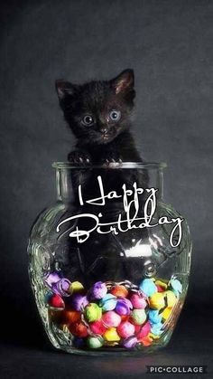 Birth Day QUOTATION – Image : Quotes about Birthday – Description Happy Birthday Sharing is Caring – Hey can you Share this Quote ! birthday for him Birthday Quotes : Happy Birthday… Happy Birthday Pictures, Happy Birthday Sister, Happy Birthday Funny, Happy Birthday Messages, Happy Birthday Quotes, Cat Birthday, Happy Birthday Greetings, Animal Birthday, Birthday Greeting Cards