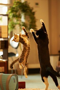 defence cats ___Trouble. Trouble. Trouble.Cats http://www.pinterest.com/pin/415034921883435153/