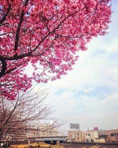 咲いてる桜のとまだの桜と  #空 #青空 #桜 #ダレカニミセタイソラ #写真好きな人と繋がりたい #写真撮ってる人と繋がりたい #photo #japan #landscape #日本 #風景 #instagram #igers #igersjp #igで繋がる空 #sky #skylovers #skyporn #skypainters #skyscraper #花 #flower #flowers #flowerstagram #floweroftheday #floralphoto #floralphotograph  #photooftheday #instasky #instagood