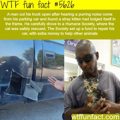 Man cut his truck open to save a kitten! - Faith In Humanity Restored!  ~WTF awesome fun facts