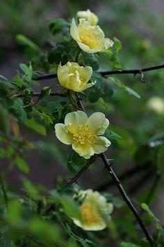 edible flowers columbus ohio