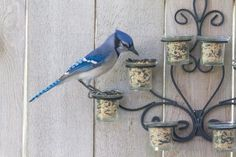 Repurpose an old metal and glass, wall-hung candle holder into a bird feeder. Love it!