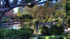 lovely japanese garden hdr - trees, garden, pnd, oriental, hdr