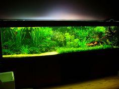 Fish Tank Aquascapes by GOFORUS, via Flickr