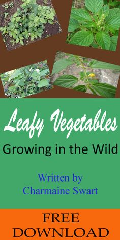 FREE eBook on Leafy Vegetables Growing in the Wild. An eBook about the most common wild edible plants which is easily available in your backyard or in the wild.
