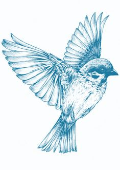 Bird, Blue, Drawing, Spring, Wing, Cute, Wildlife