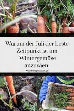 Früh planen lohnt sich! Für frisches Gemüse auch im Winter solltest du jetzt schon einmal vorsäen. Hier erfährst du welche Sorten jetzt in die Erde müssen.