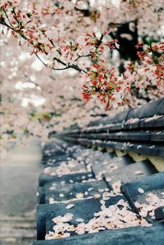 Petals on the roof - Japan.