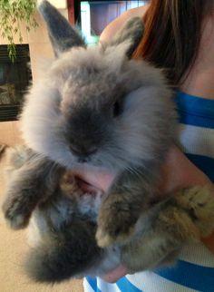 Puff, the lionhead bunny.  2 lbs of fur ball.