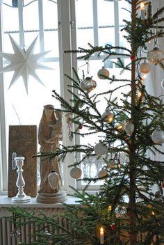 Vita Ranunkler--christmas