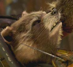 Rocket Raccoon, Racoon, Galaxy Vol 2, Drama Queens, Guardians Of The Galaxy, Avengers, Marvel, Superhero, Cool Stuff
