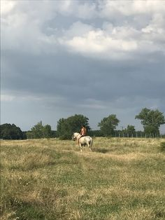 Horse 🐴