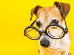 french dog names Search Results – My Pet's Name Good Boy Dog Names, Funny Dog Names, Funny Puns, Pet Names, French Dog Names, Dog With Glasses, Irish Setter, Stock Photos, Pets