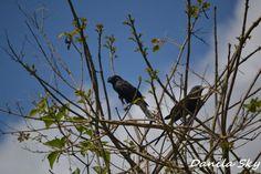 Birds. Rurrenabaque. Bolivia.