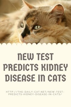 One in three cats will develop kidney disease in their lifetimes. But a new test from Antech predicts kidney disease in cats two years before it occurs. Cat Care Tips, Pet Care, Pigs Eating, American Animals, Cat Health, Health Tips, Can You Help, Healthy Pets, Kidney Disease