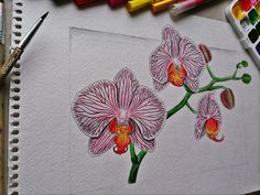 Orchid by drawingsbylenna23