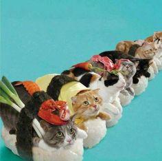 Cats dressed as Sushi. Hahaha