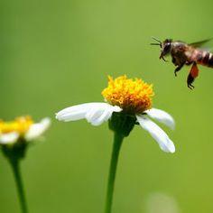 Photo Busssyyy like a Bee by Jensen  Chua on 500px
