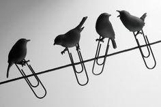 blackbird clips - Google zoeken