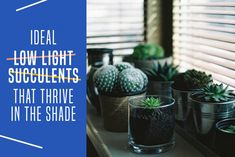 If your home doesn't get ample sunlight during waking hours, you might wonder what house plants will thrive. Check out these indoor succulents that thrive in low-light. Low Light Succulents, Flowering Succulents, Types Of Succulents, Planting Succulents, Succulent Plants, Room With Plants, House Plants Decor, Plant Decor, Succulent Display