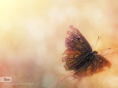 butterfly...... by pomian3. Please Like http://fb.me/go4photos and Follow @go4fotos Thank You. :-)