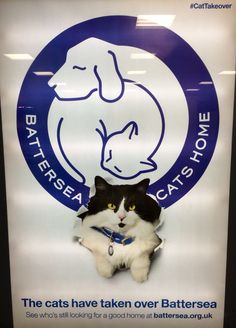 Here is an ad we spotted at Archway tube station promoting cat rehoming at Battersea Dogs and Cats Home. #CatTakeover #charity #advert #bdch