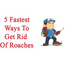 5 Fastest Ways To Get Rid Of Roaches #Pest_Control #Pest_Control_Roaches #Get_Rid_Of_Cockroaches #Roach_Killer_DIY #DIY_Cockroach_Killer