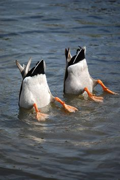 synchronized swimming - a personal favorite