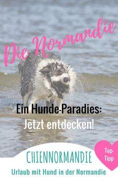 Die Normandie zählt zu den hundefreundlichsten Regionen Frankreichs. Entdecke die Normandie zusammen mit Deinem Hund! Hier erfahrt Ihr alles, was Ihr wissen müsst. #Normandie || #Normandy || #Cotentin || #Urlaub mit #Hund || #UrlaubmitHund || #Hundeurlaub || #Reiseführer || #Reisen || #Hunde || #Frankreich || #France