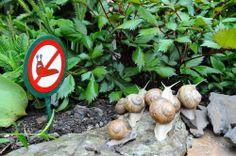cz: Stop the slugs The Slug, Garden Sculpture, Outdoor Decor, Flowers, Home Decor, Decoration Home, Room Decor, Florals, Flower