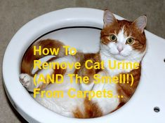 How To Remove Cat Urine (AND The Smell!) From Carpets