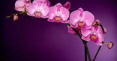 A negatív energiák semlegesítése csökkenti a stresszt, javítja az egészséget és segít boldog pillanatokat megélni. Most bemutatjuk a 12 leghatékonyabb növényt, mellyel pozitív energiát teremthetsz otthonodban vagy az irodában. / 12 növény, amik pozitív energiát teremtenek otthonodban! ~ növények, gyógynövények, fényörvény, természet, energia, pozitív energia, spiritualitás, Forever Flowers, Hd Images, Hd Wallpaper, Tulips, Flower Arrangements, Beautiful Flowers, Art Pieces, Floral Wreath, Bloom