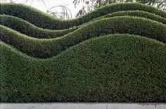 Wellen förmig Gartenhecke-immergrün Schnittprofil