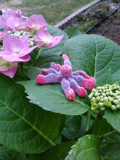 There's a gummy spider on my hydrangeas...