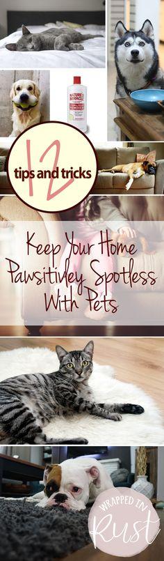 "'Keep Your Home ""Paws""itivley Spotless With Pets...!' (via wrappedinrust.com)"