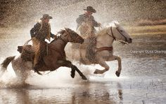 Cowboys Riding Running Horses in Water