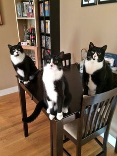 ** Cats won'ts let human set the table until they're fed.