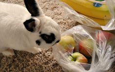 Myös puput pitävät ompuista! Food, Essen, Meals, Yemek, Eten