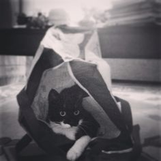 Shopper cat
