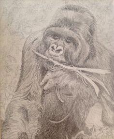 Mountain Gorilla, pencil