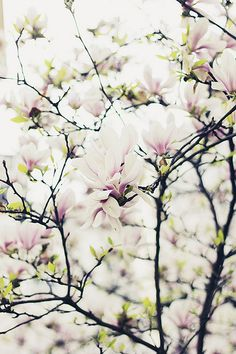 """Can words describe the fragrance of the very breath of spring?"" ~Neltje Blanchan"